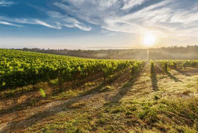 意大利为什么盛产葡萄酒,意大利葡萄种植需要哪些自然条件